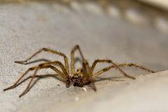 Itsi-Bitsi Spider