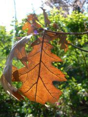 Autumn meets spring