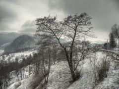 Tree in the winter