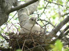 The bird\'s nest